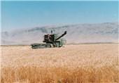 71 درصد محصولات تولیدی زنجان متعلق به امور زراعی است