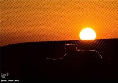 قمیص المنتخب الوطنی لکرة القدم فی ایران الاسلامیة یحمل صورة فهد آسیوی نادر