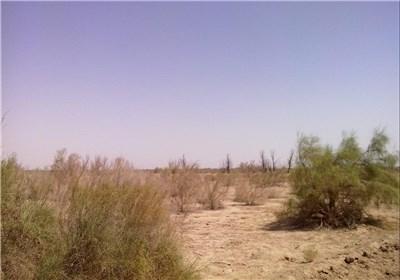 بازدید خبرنگاران یزد از منابع طبیعی بیابان زدایی