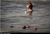 شنا در سواحل بوشهر