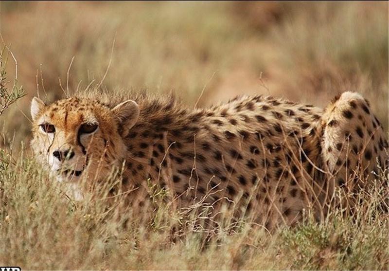 """منطقه شکار ممنوع """"کمکی"""" بهاباد به پناهگاه حیات وحش ارتقا پیدا کرد"""