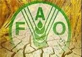 فائو: قرنطینه ها و هجوم خریداران باعث گرانی مواد غذایی در جهان می شود