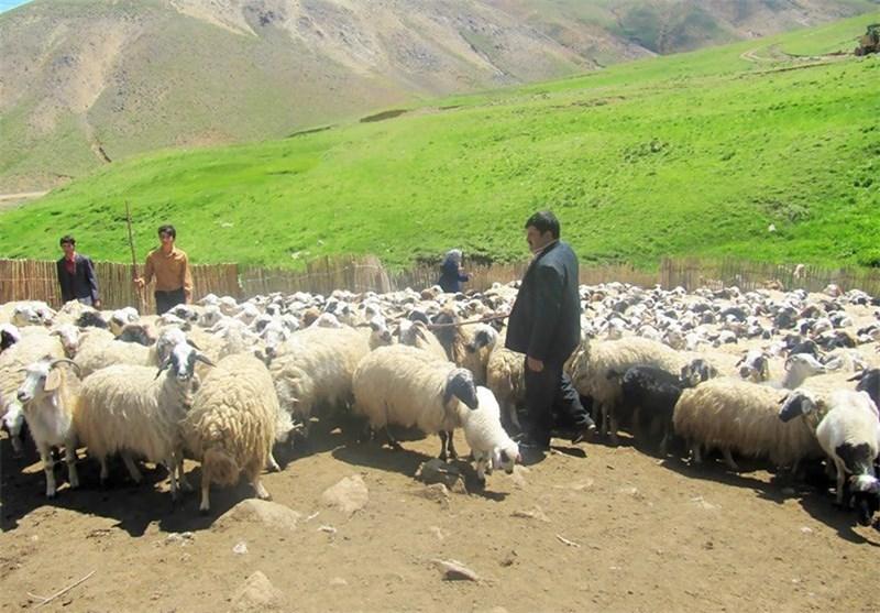 افزایش قیمت علوفه جدیترین مشکل عشایر قوچان