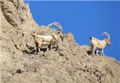 سفیدکوه و شیربند دامغان به منطقه حفاظتشده ارتقاء مییابند////انتشار