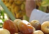 استحکام استخوانها و تقویت اعصاب به همراه درمان کمخونی با مصرف خرما
