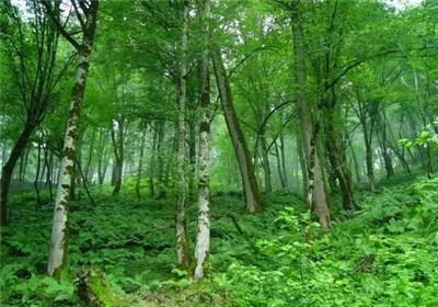 """واگذاری زمینهای اطراف آزادراه تهران ـ شمال """"تیر خلاص به جنگلهای هیرکانی"""""""