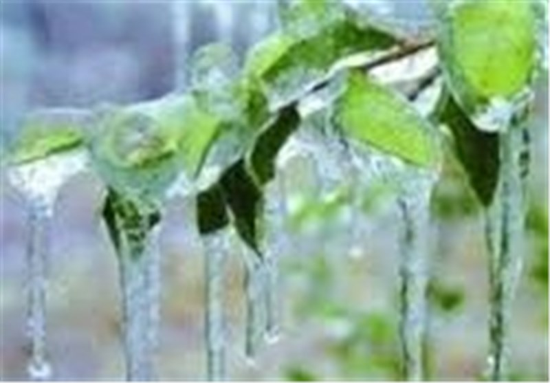 کشاورزان سیستان و بلوچستان مراقب سرمازدگی محصولات کشاورزی باشند