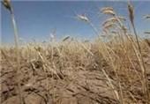 جهاد کشاورزی به موضوع خسارات ناشی از خشکسالی مشهد رسیدگی میکند