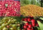 افزایش هزینههای تولید باغداران قیمت میوه را گران کرد