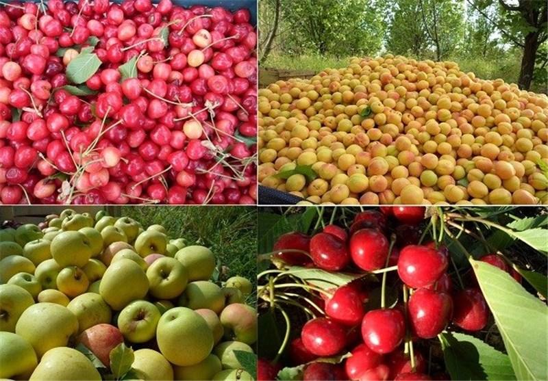 برداشت میوه از نهاوند