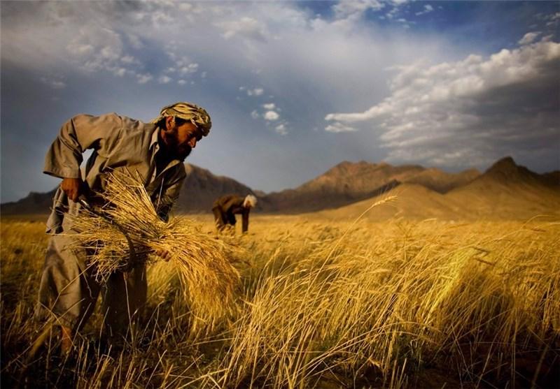 توضیحات مدیرکل اتباع خارجی وزارت کار درباره محدودیت شغلی مهاجرین افغانستانی