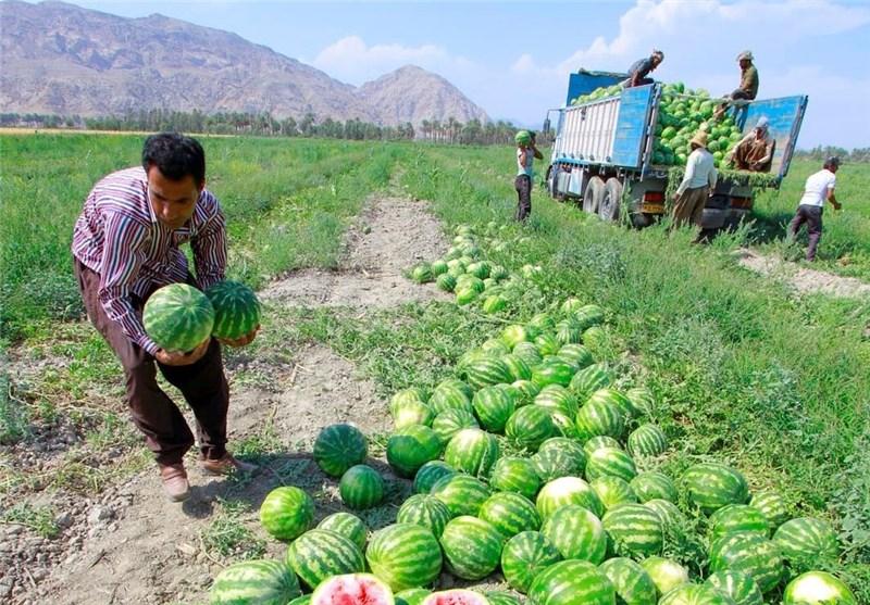 سالانه 90 هزار تُن میوه در بروجرد تولید میشود