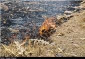 خراسان جنوبی| جنگل درختان بیابانی در جاده بیرجند به سربیشه دچار حریق شد