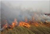 12 هکتار از مراتع دریاچه هامون در آتش سوخت