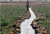 گزارش ویدئویی| روزگار ناخوش کشاورزان بخش حمیدیه خوزستان / زمینهایی که با آب شور آبیاری میشوند