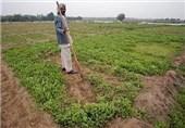 کشاورزی خوزستان؛ قربانی وعدههای ناتمام