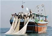 40 درصد میگوی دریایی کشور در استان بوشهر صید میشود