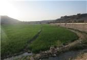 تخریب منابع طبیعی در حاشیه رودخانه بشار یاسوج