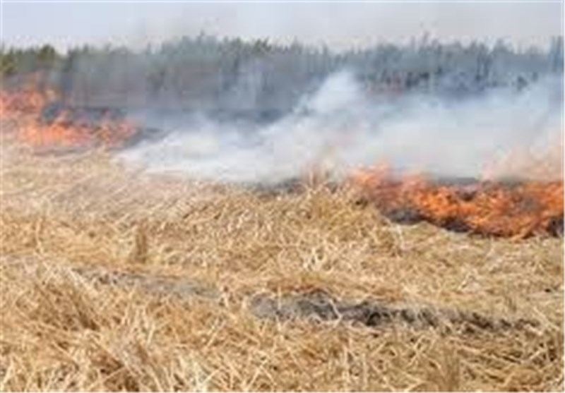 کاه و کلش 450 هکتار از مزارع کهگیلویه در آتش سوخت