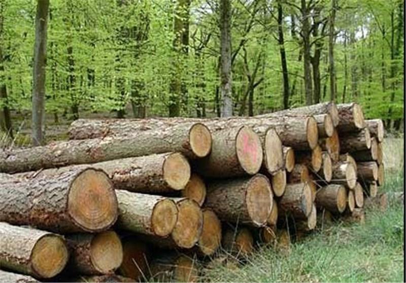 قراردادهای بهرهبرداری از جنگلها دیگر تمدید نمیشود