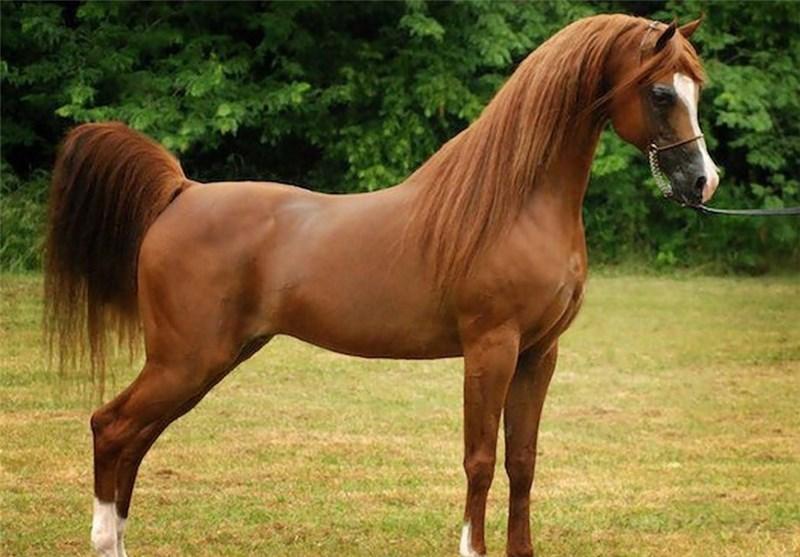 قیمت اسب ها