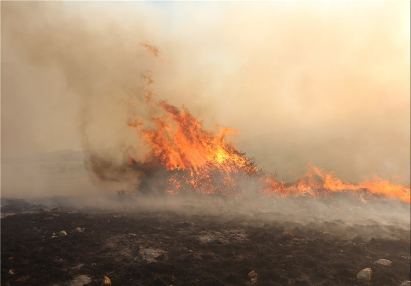 مهار آتشسوزی در پارک ملی گلستان؛حدود 50 هکتار جنگل در آتش سوخت