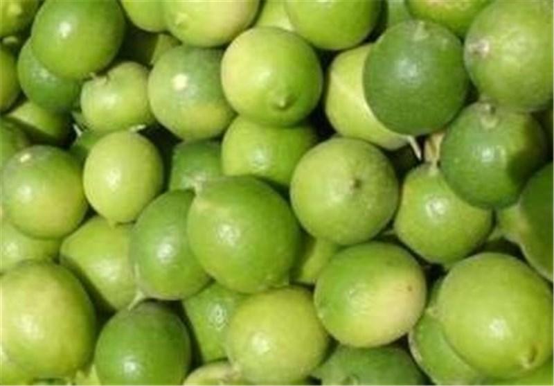 خبرگزاری تسنیم - ۳۲۰۰ هکتار باغ لیمو ترش در استان بوشهر ...