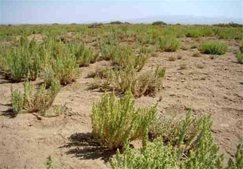 بیش از حد مجاز از اراضی مساعد کشاورزی گلستان استفاده میشود