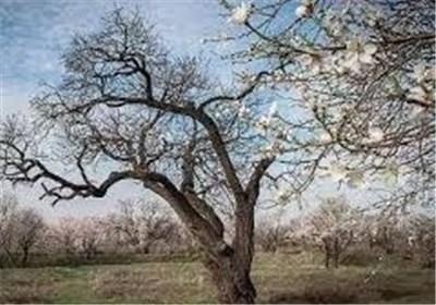 نیمی از باغستان سنتی قزوین به ورطه نابودی کشیده شده است