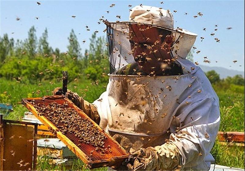 زنبور عسل گلستان