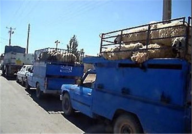 نمره قابل قبولی در کاهش قاچاق دام در کردستان کسب نکردهایم