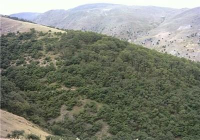 تراژدی قاچاق چوب در ایران  تیشه قاچاقچیان بر ریشه جنگلهای زاگرس / تجارت سیاه قلب کهگیلویه و بویراحمد را نشانه گرفت
