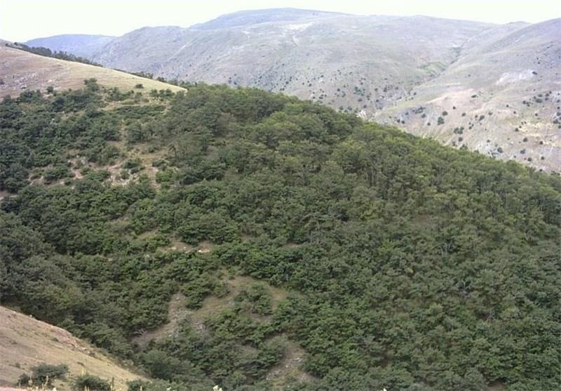 جنگل بلوط
