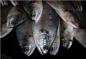 آلزایمر، التهاب روده و مشکلات قلبی عوارض مصرف ماهی تیلاپیا