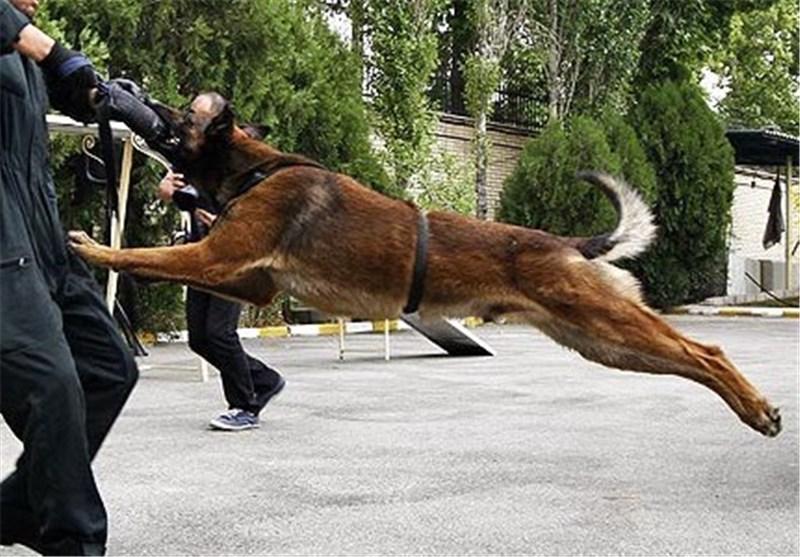 از بین بردن حس بویایی سگ