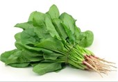 Spinach Extract Reduces Cravings, Weight