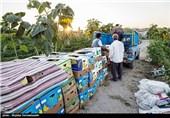 برداشت محصولات کشاورزی