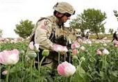 درآمد میلیاردی قاچاق مواد مخدر به جیب چه کسانی میرود؟