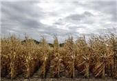 2 میلیون محصولات کشاورزی از زنجان صادر شد