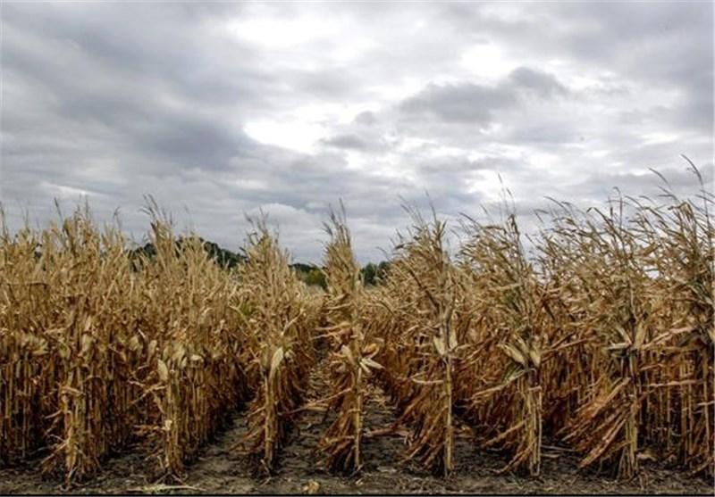 2 میلیون تن محصولات کشاورزی از زنجان صادر شد