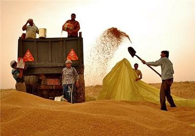 قیمت خرید تضمینی محصولات زراعی سال ۹۴-۹۳ تصویب شد