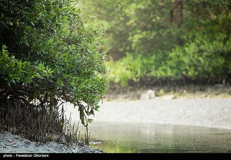 Hara Forest: Iran's Qeshm Eco Tourism