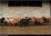 میدان فروش گوسفند - اردبیل