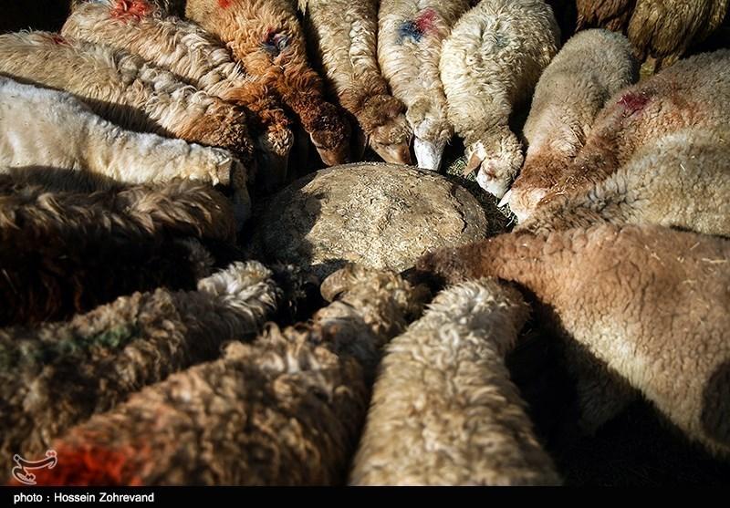 صفهای طولانی برای خرید گوشت در قصابیها/اردبیل حال و هوای عید به خود گرفت