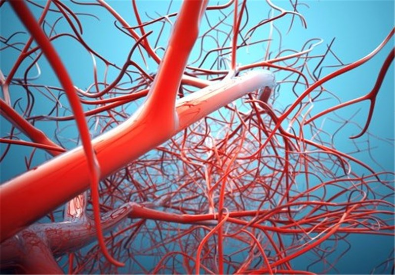 New Cells Meant to Form Blood Vessels Developed