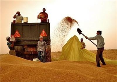 گندم در صدر کالاهای وارداتی ایران؛ ۴.۵ میلیارد دلار خرج غلات کردیم