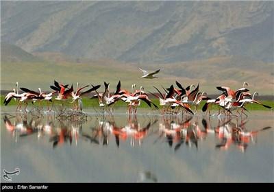 طبیعت شیراز