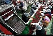 مجتمع صنایع غذایی صنعت عنبرآباد بهرهبرداری میشود