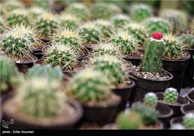 Seasonal Exhibition of Flower and Plant Wraps Up in Tehran