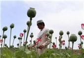 تریاک افغانستان